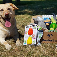 Receive Dog Toys For FREE